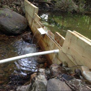 Randy's dam