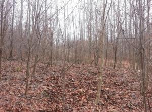 found trees